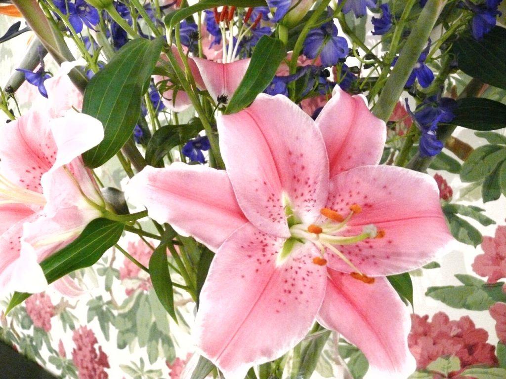 bloomydays1